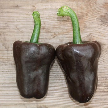 Peper Chilhuacle Negro