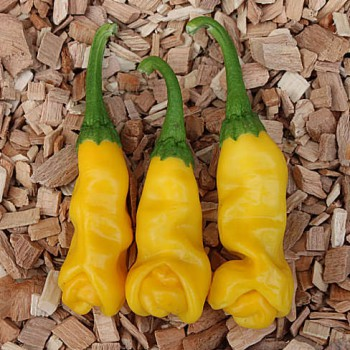 Peter Peper geel