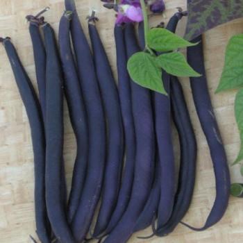 Sperzieboon Purple Teepee