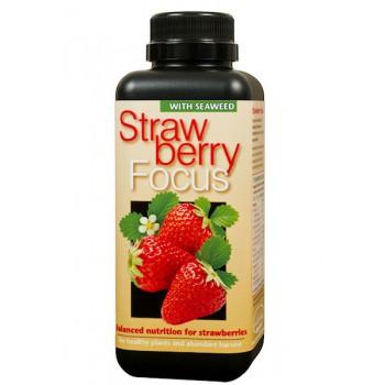 Strawberry Focus - 100 ml