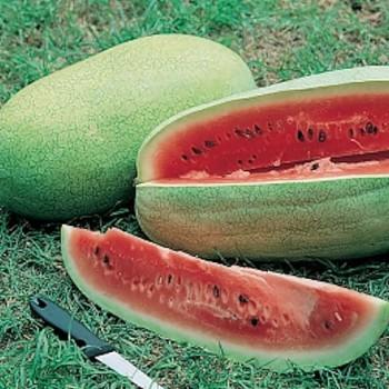 Watermeloen Charleston Grey