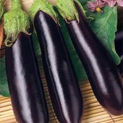 Aubergine plant Violetta Lunga