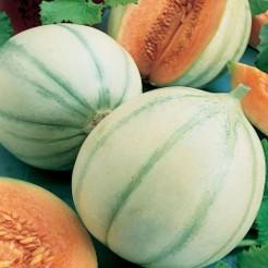 Cantaloupe di Charentais