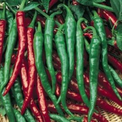 Cayenne Long Slim