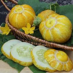 Komkommer citroen