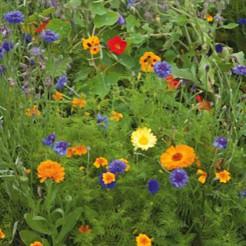 Eetbare bloemenmix