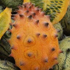 Kiwano plant