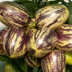 Pepino (Meloenpeer)