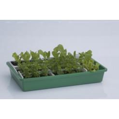 Seed tray 43