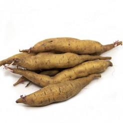 Zoete aardappel knol Tainung 65