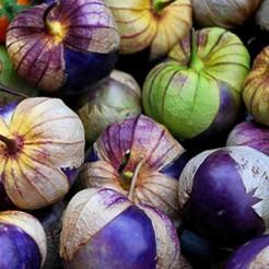 Tomatilloplant Purple