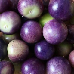 Tomatillo Purple de Milpa