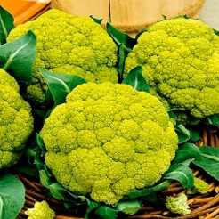 Verde di Macerata