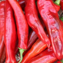 Paprika plant Puntpaprika zoete rode