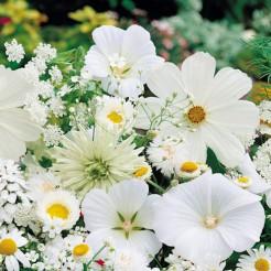 Zomerbloemenmix wit