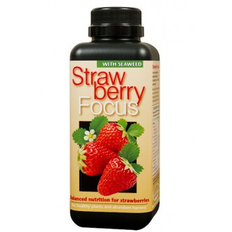 Aardbeivoeding - Strawberry Focus - 300 ml