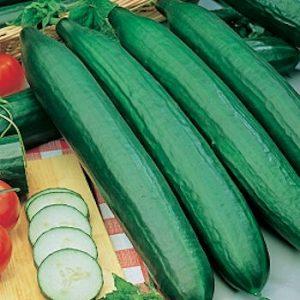 Voorkom bitter smakende komkommers