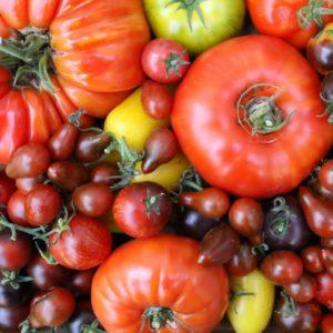 Tomaten lekker, veelzijdig en gezond