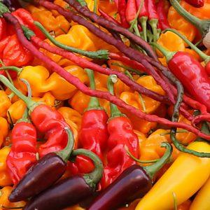 Alles wat je wilt weten over pepers